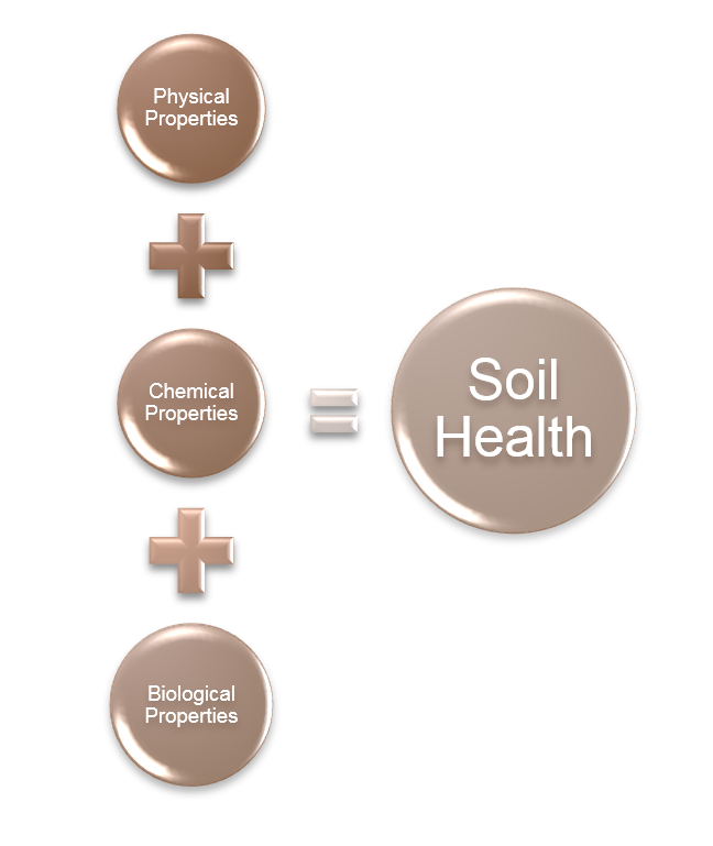 Student research cover crop effects on soil properties for Soil meaning in english