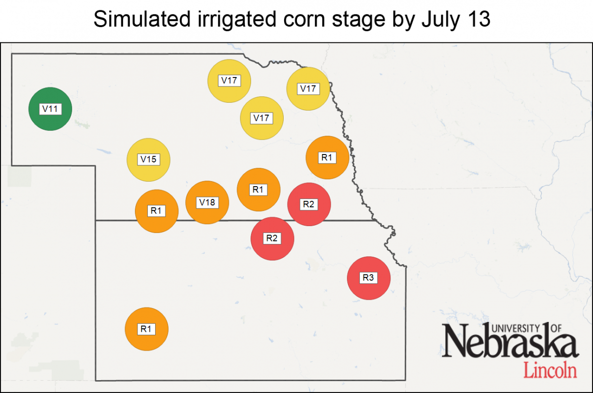 Simulated irrigated corn stages