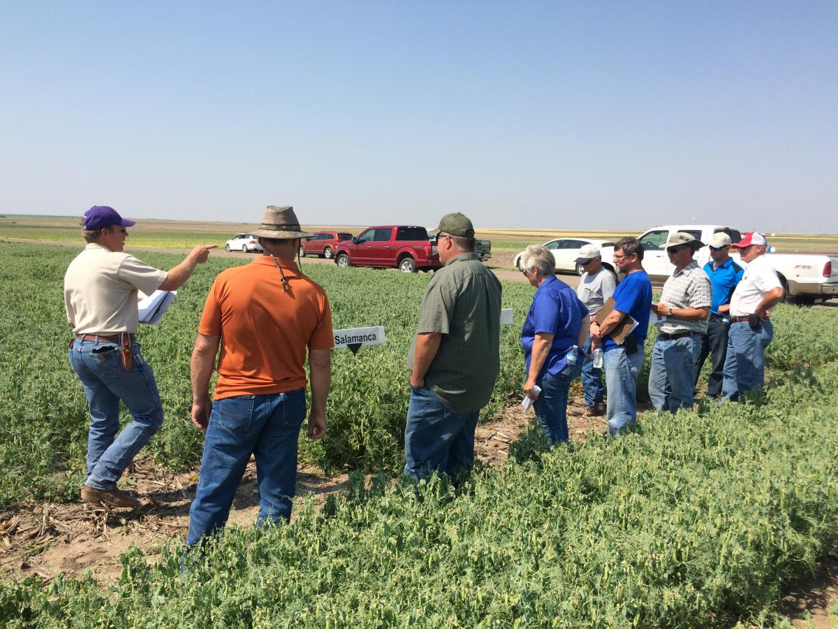 KSU Cropping Systems Specialist Lucas Haag speaking at field pea field day