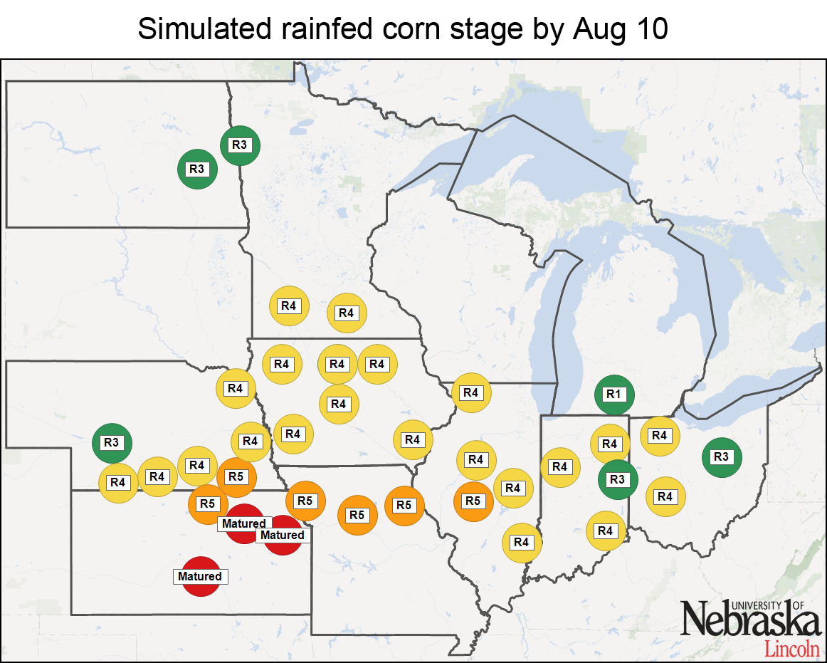 Simulated rainfed corn stages