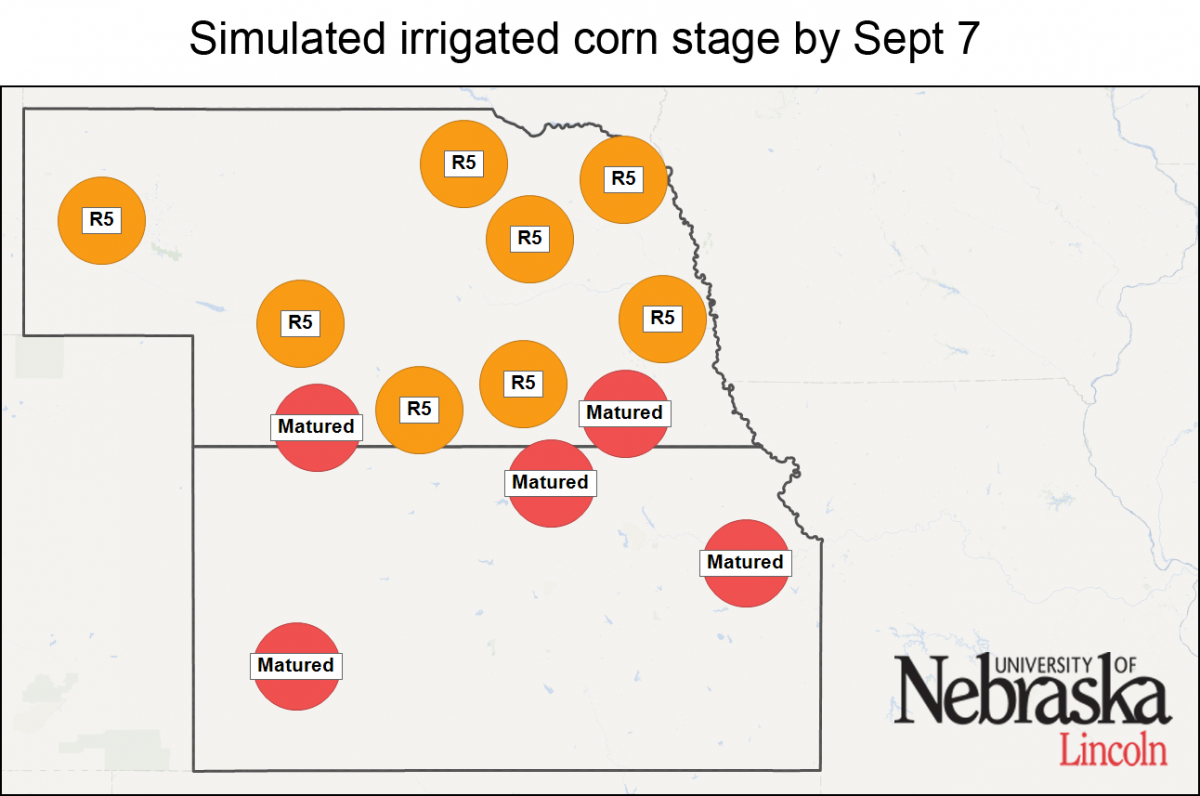Simulated irrigated corn stages by Aug. 24