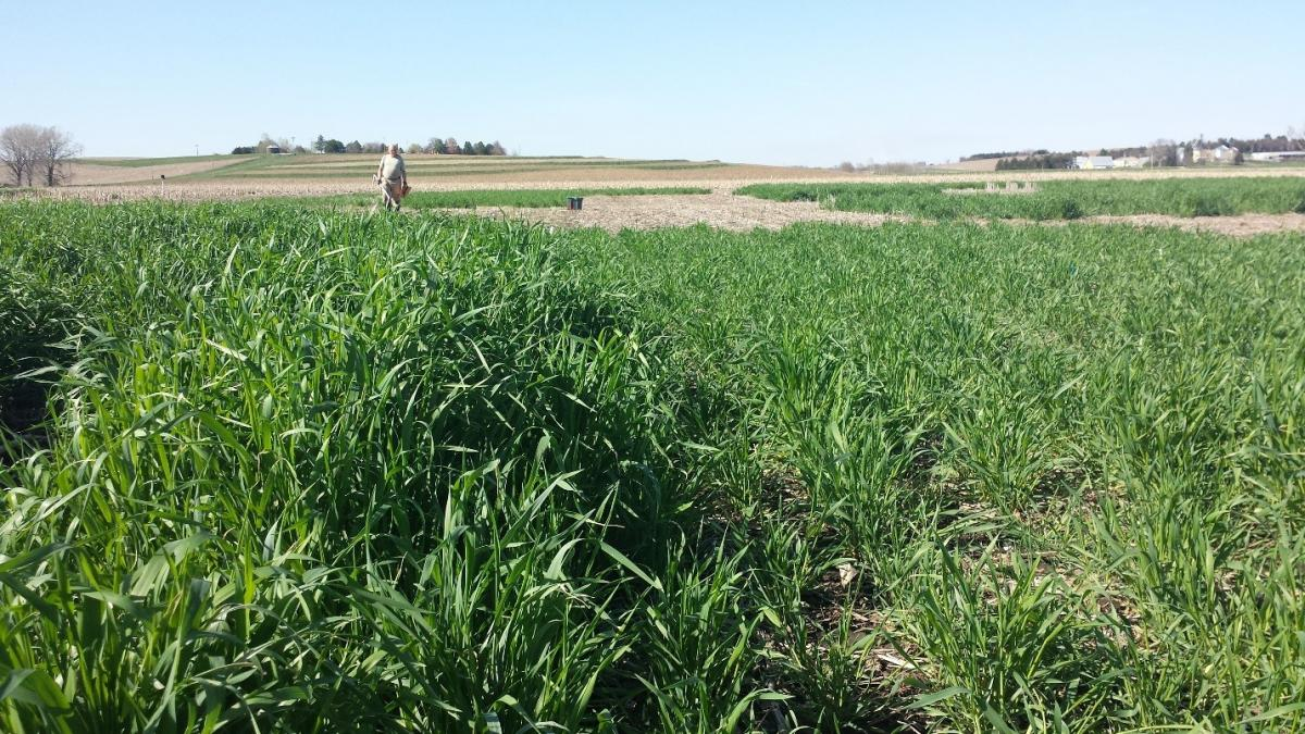UNL cover crop research plots