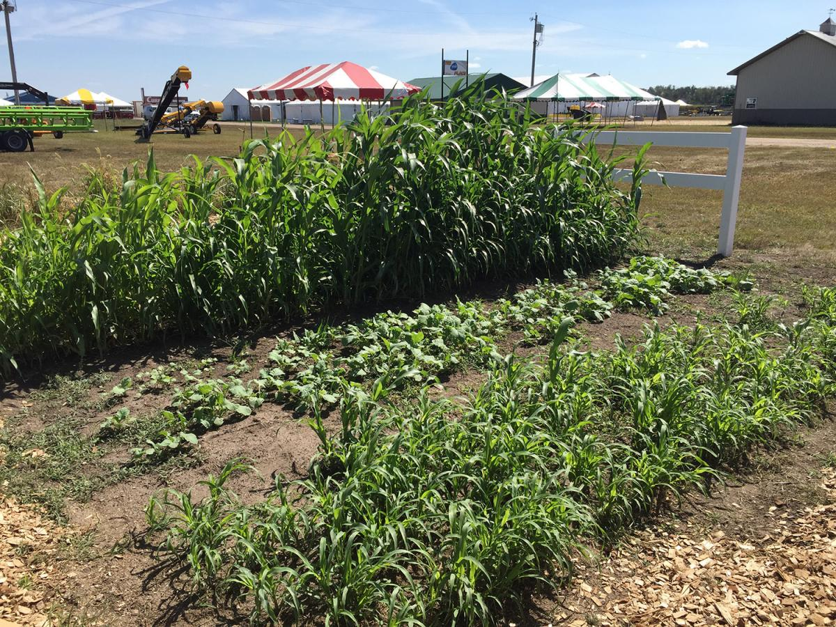 Crop plots at the IANR display at Husker Harvest Days
