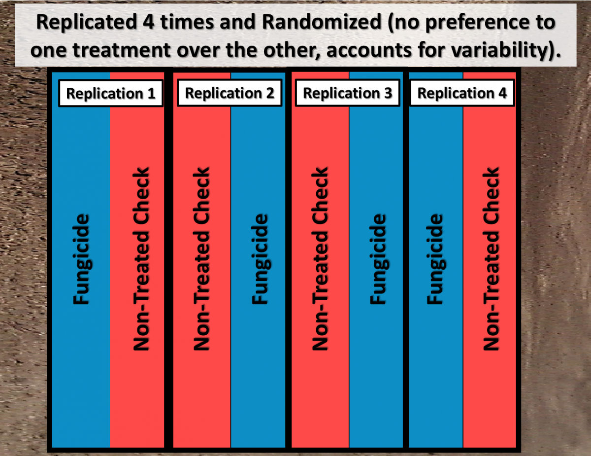 Plot design for randomized, replication field trial with 2 treatments