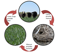 Diagram of pasture nutrient cycle
