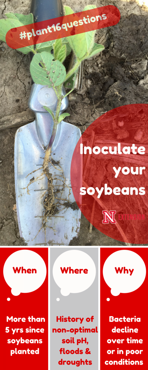 Infographic asking 3 key questions to consider before inoculating soybeans