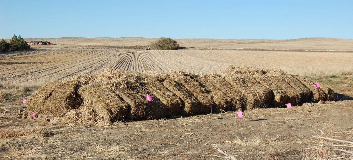 sacked sugar beets covered by straw