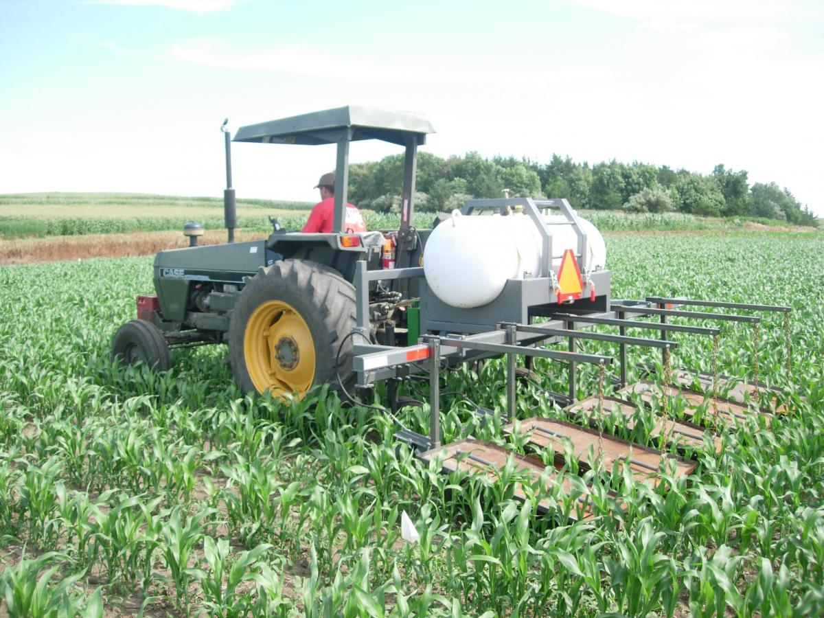 Flame weeding sorghum in an organic system