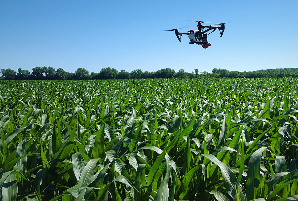 Drone equipped with infrared sensors flying over corn