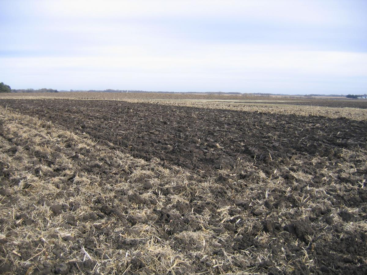Tillage plots in Minnesota trial