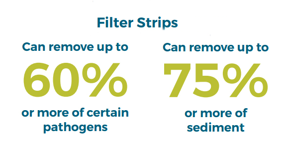 Buffer strips can remove up to 60% of certain pathogens and 75% of sediment