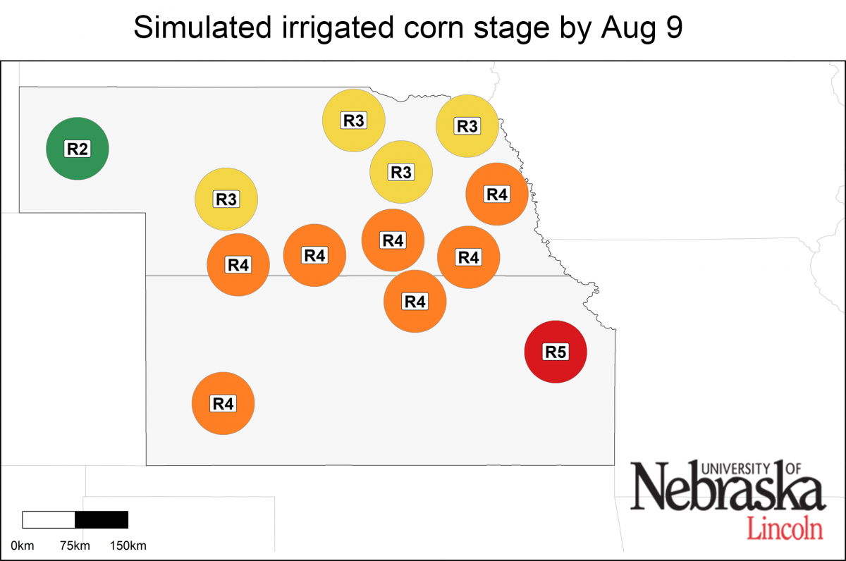 Estimated growth stages of irrigated corn