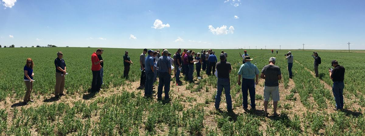 Participants at a 2016 Field Pea Field Day