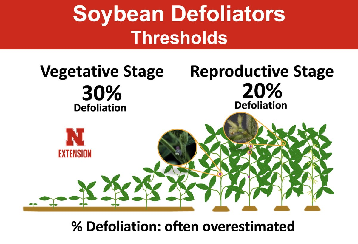 Soybean defoliator thresholds