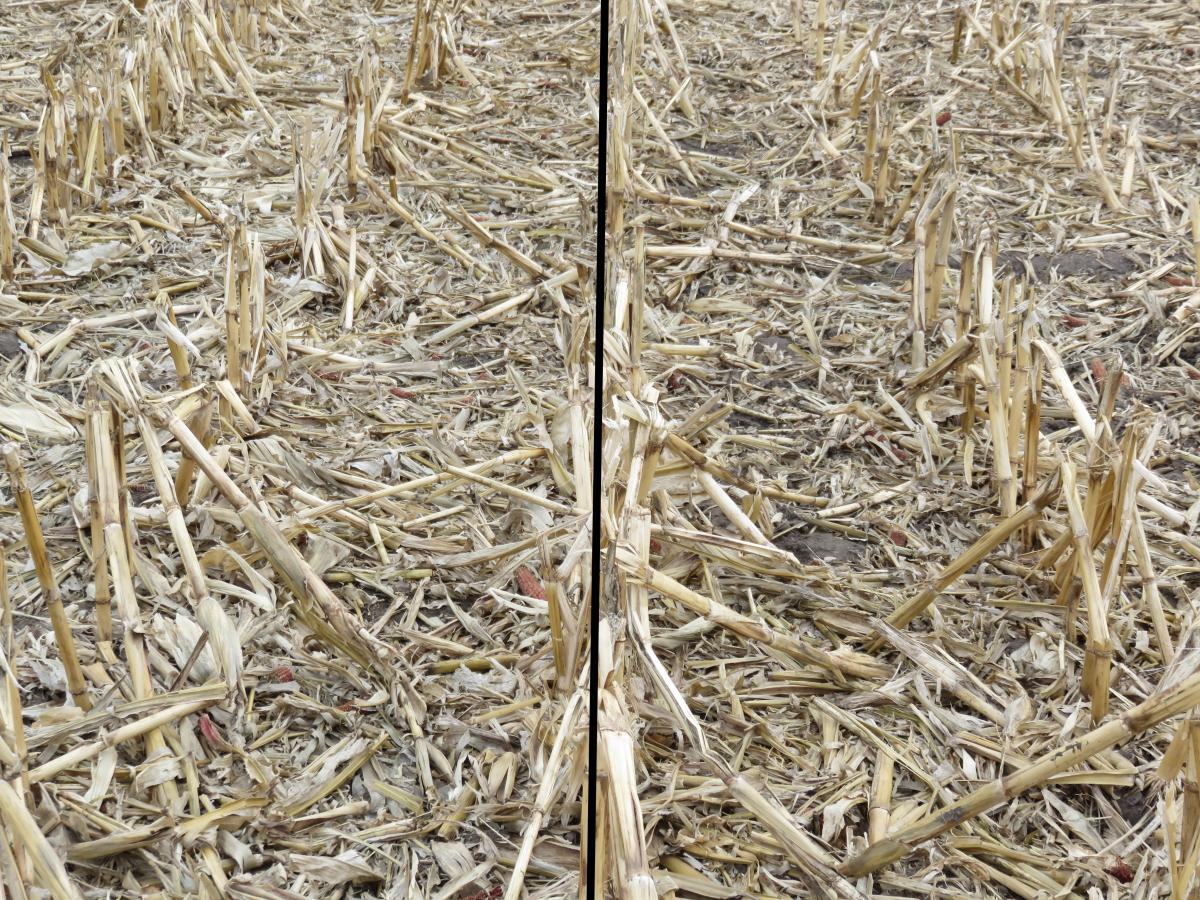 Field comparison of grazed and ungrazed corn residue