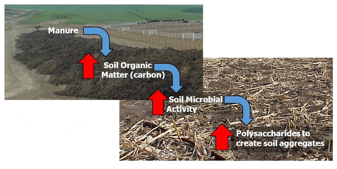How manure reduces soil erosion and runoff