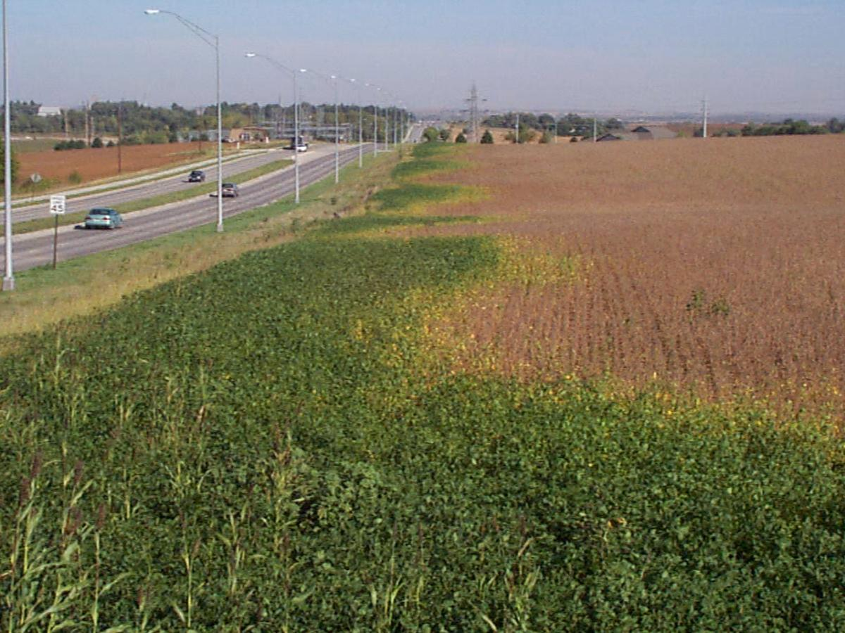 Effect of street lights on soybean growth