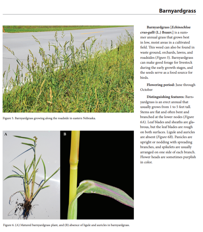 Barnyardgrass page of EC3020