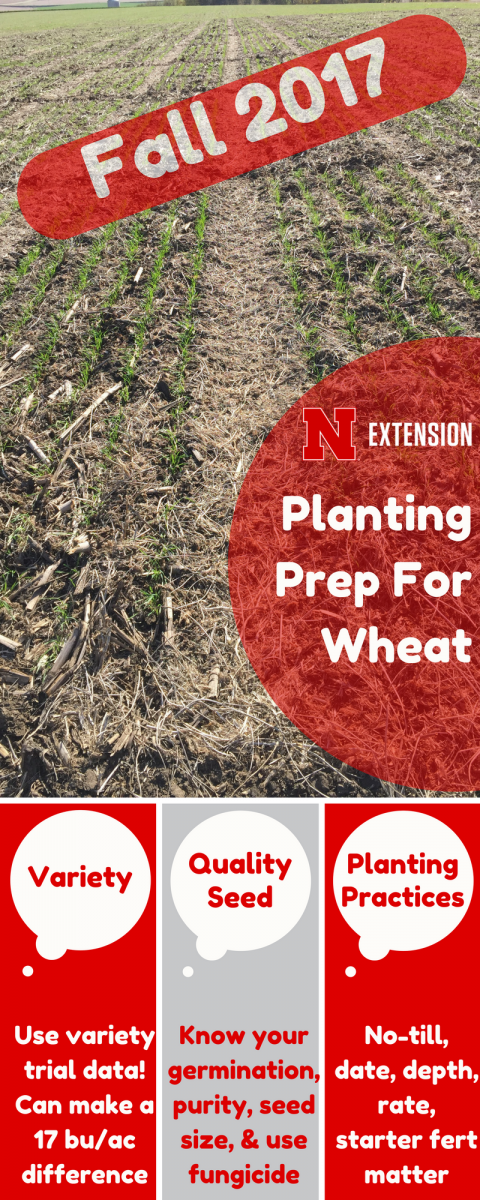 Inforgraphic on winter wheat tips