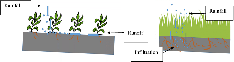 Illustration of water runoff and infiltration in a field