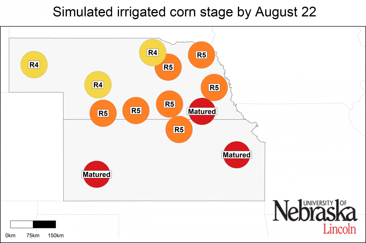 Simulated developmental stage for irrigated and rainfed corn at each location.