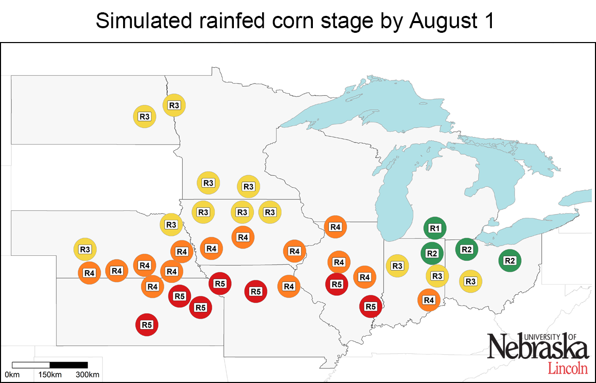 Simulated irrigated corn growth stages by Aug. 1