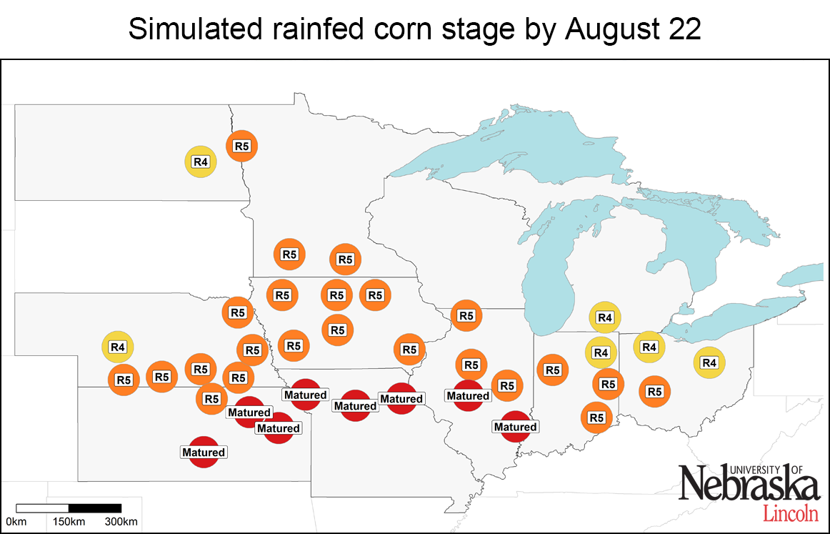 Simulated rainfed corn stage by Aug. 22