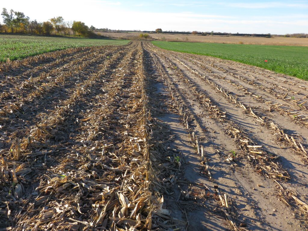 Field trial with high moisture corn silage
