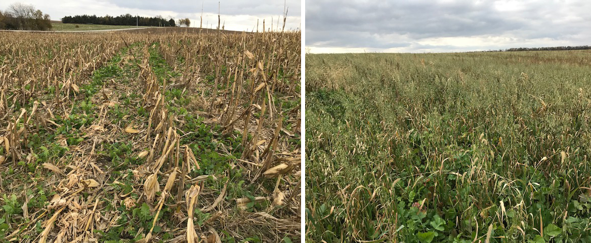 Two cover crop fields in southeast Nebraska