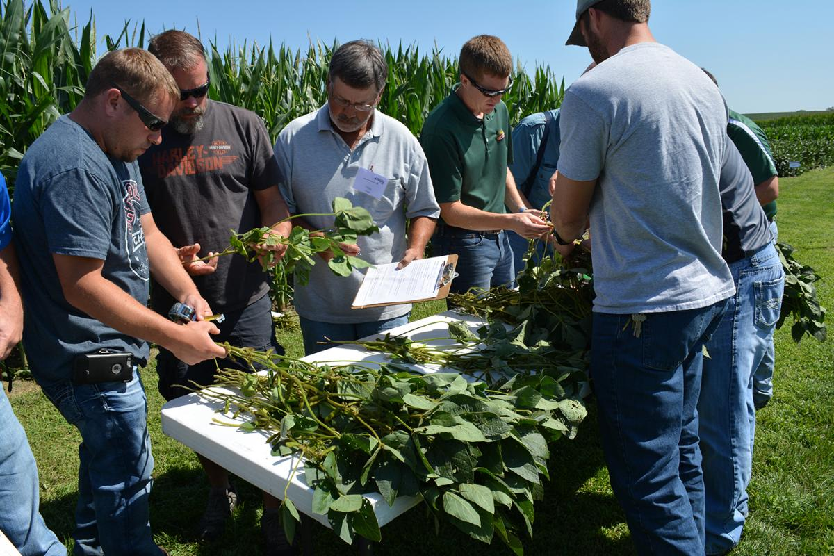 Growers examine soybean plants during a hands-on diagnostic during an earlier Soybean Production Clinic.
