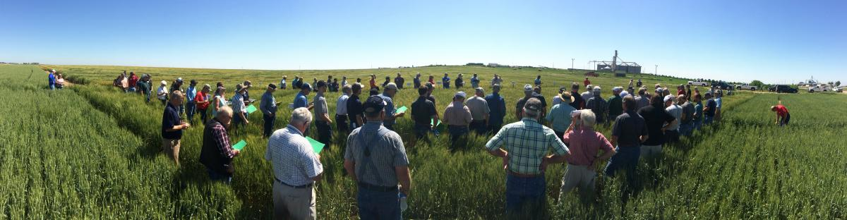 Crops featured at June field days
