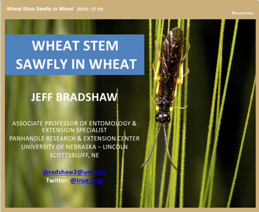 Wheat stem sawfly webinar