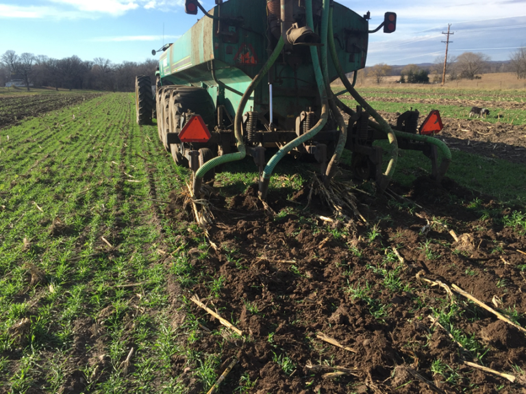 Injection of manure in rye cover crop in the fall (University of Minnesota photo)