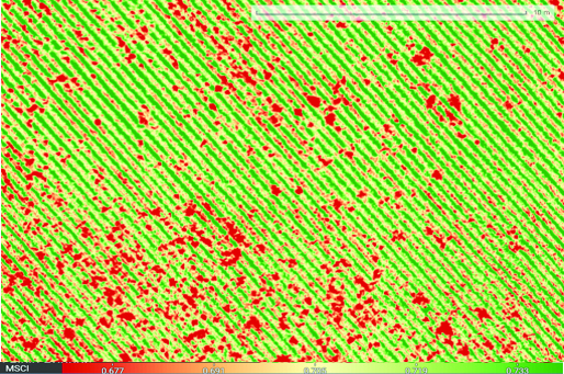 Drone multispectral image of plant types