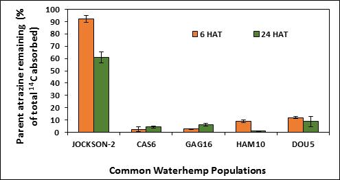Chart showing percent atrazine remainin in four waterhemp populations