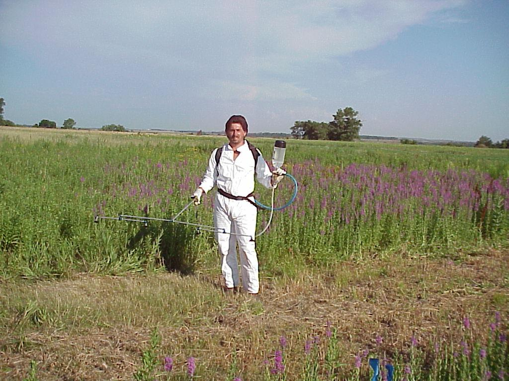 Stevan Knezevic in PPE preparing to treat purple loosestrife