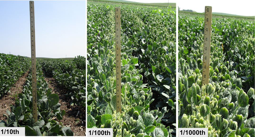 Soybean height as influenced by three rates of Engenia applied at V7/R1 stage