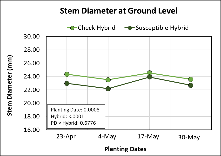 Graph showing effects of four planting dates and two hybrids on stem diameter measured at ground level.