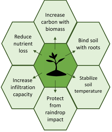 Graphic listing the potential soil benefits of cover crops