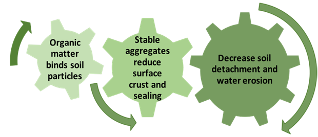 Graphic showing three interacting cogs showing how increasing soil organic matter concentration increases agggregate stability, which directly increases the soil's resistance to water erosion.