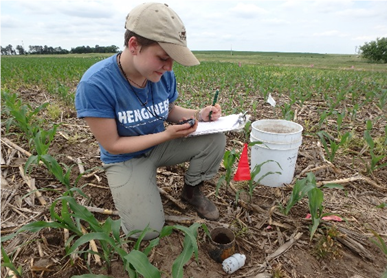 Collecting sorptivity data at the research site at the Eastern Nebraska Research and Extension Center near Mead.