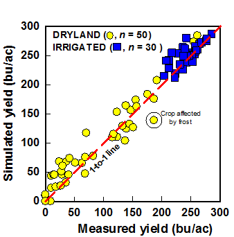 Graph showing validation of Hybrid-Maize simulations of final yield (bushels per acre) against actual yields in optimally managed crops, under irrigated and rainfed conditions.