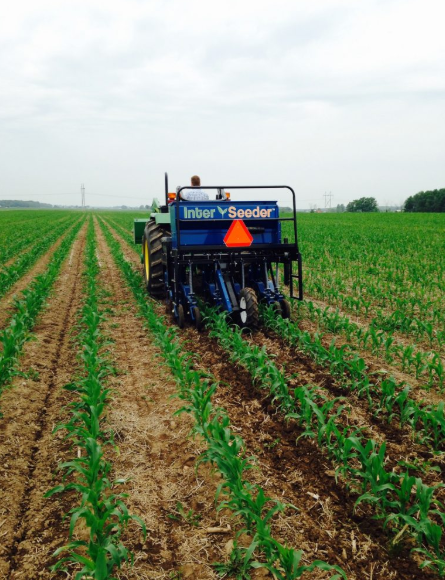 Interseeder being used to drill cover crops into V5 corn in Wisconsin