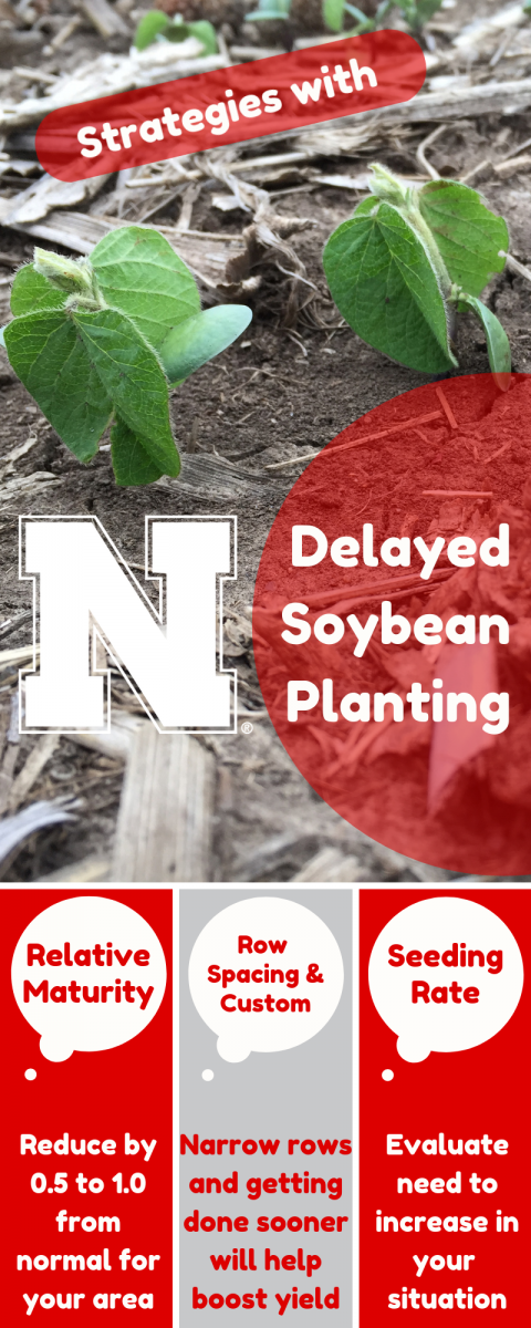 Strategies to use with delayed soybean planting