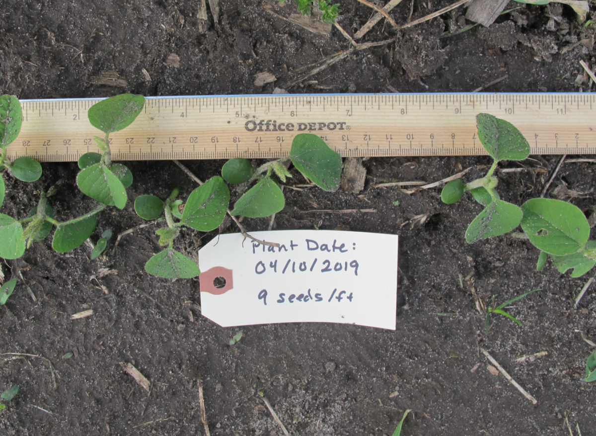 Soybean planted April 15; photo taken 5/13