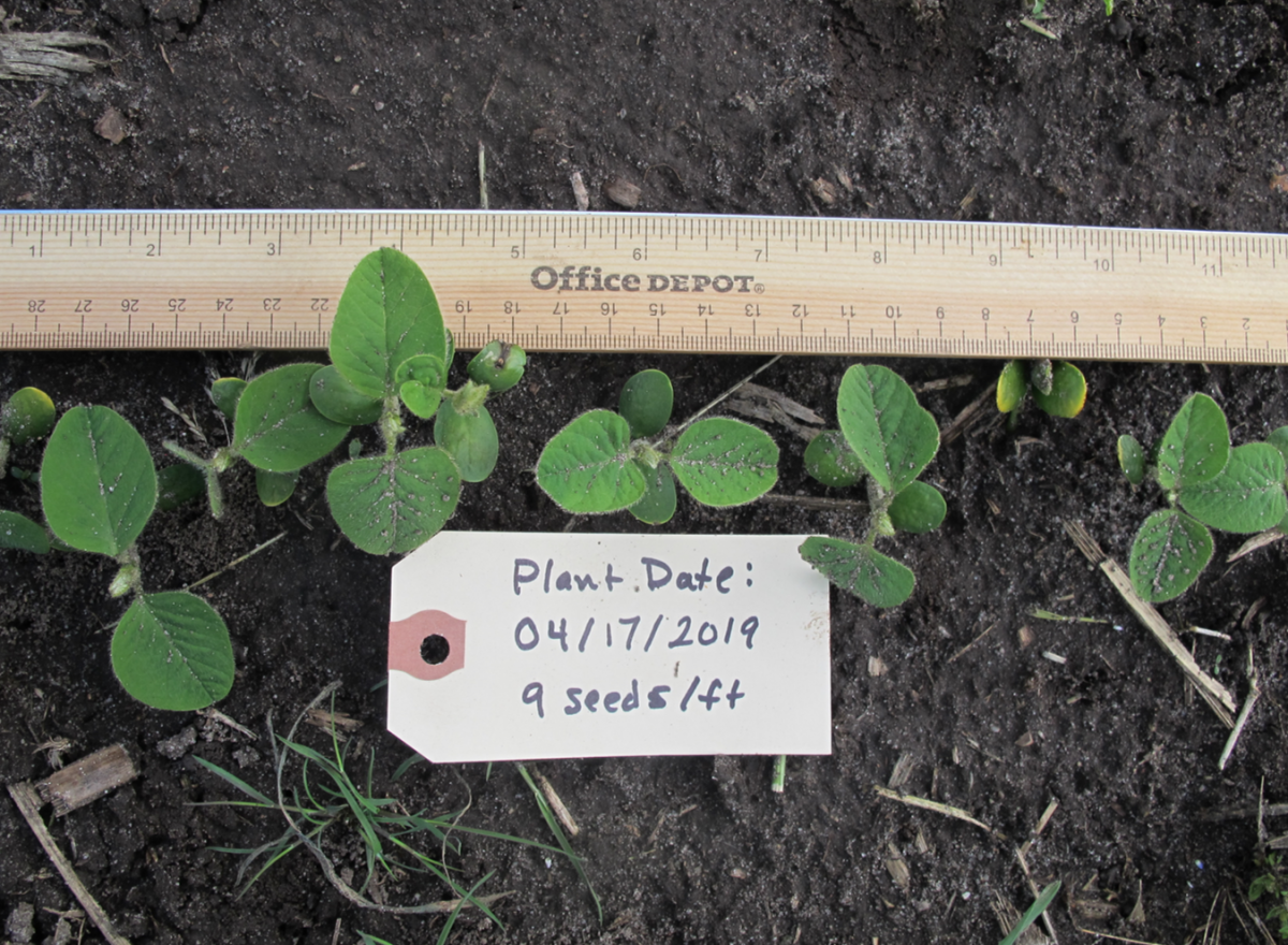 Soybean planted 4/17; Photo taken 5/13