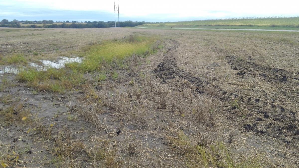 Equipment ruts from running on wet soils