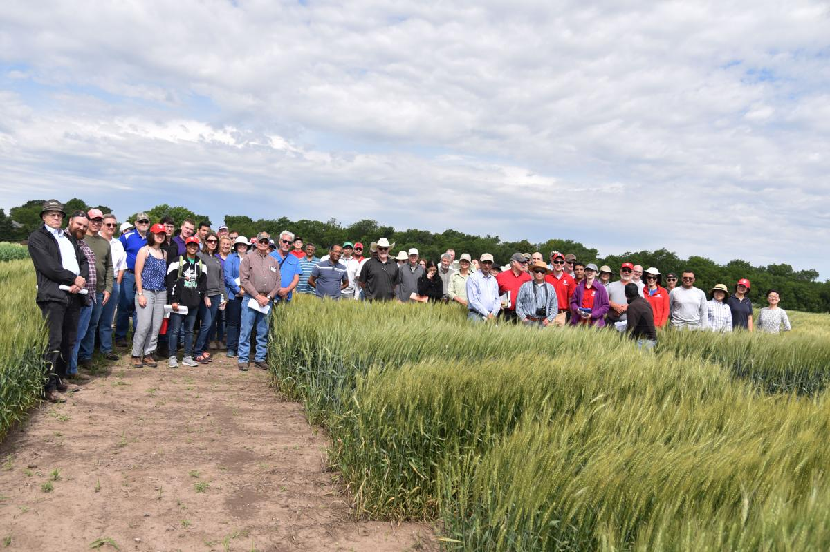 Attendees of a Great Plains Wheat Breeders Field Day held at Havelock Research Farm near Lincoln on June 11.