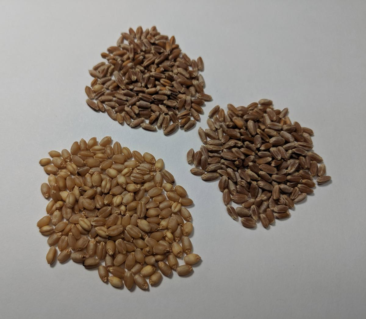 Three groups of weed seeds in various sizes