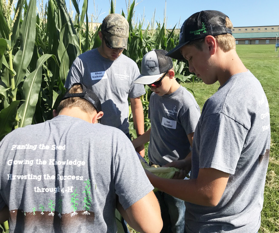 Kornhusker Kids 4-H Club examine a corn plant to answer questions in the corn growth stage, maturity and development section of the crop scouting contest.